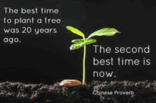 the-best-time-to-plant-a-tree-was-20-years-23663411